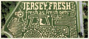 Maze_jerseyfresh